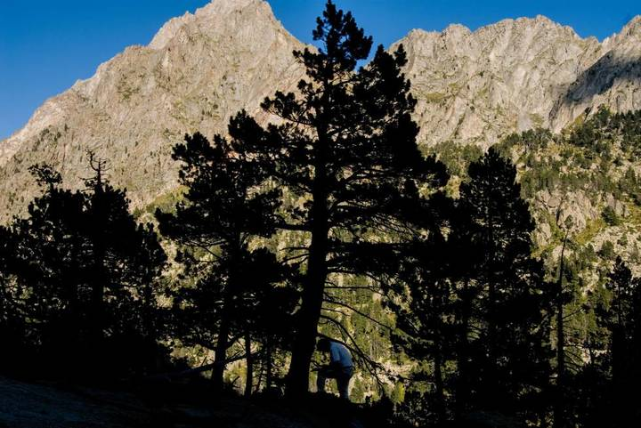 Los árboles cada vez crecen más rápido y mueren antes -